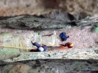 A secret canyon and abseiling Boars Head